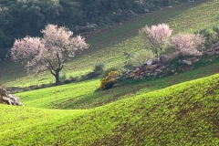 Spanje-Andalusië-01