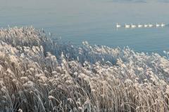 Winter-Alblasserwaard-04