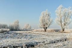 Winter-Alblasserwaard-05