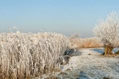Winter-Alblasserwaard-06